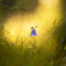 В лучах заката / Летние цветы