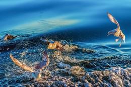 чайки / В море