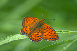 В ожидании солнца / Бабочка после дождя