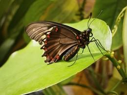 / Выставка живых экзотических бабочек в Мюнхене
