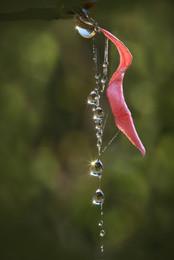 Украшение осени / роса на паутинке