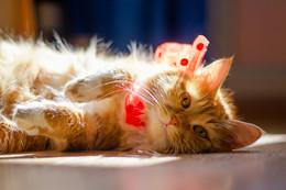 Да будет свет / Вот такая... хотя и не любят фотографы фоты котиков...