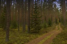 Всё глубже в лес... / На лесной прогулке.