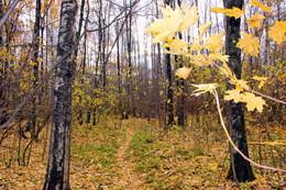 "Тропинка / Осень в парке ""Тропарево-Никулино"""