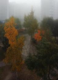/ осеннее туманное утро