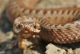 гипноз / змея