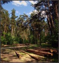 Сосновый бор в полдень / Лесозаготовки