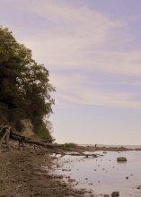 Берег моря / Деревья после бури
