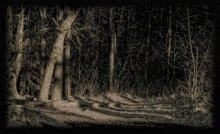 In the Old Forest... / .....