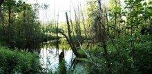 Нехожеными тропами... / Малые реки Беларуси.  Любите природу-Мать Вашу!!!