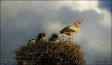 Бiлий лелека / Бiлий лелека один з найулюбленiших птахiв. По-рiзному його називають: бусол, бузьок, гайстр, бацян. Та мабуть з найлагiднiших з назв усе ж лелека, – птах, що приносить щастя, персонаж багатьох казок та легенд. Але, якщо в народi люблять лелек за їх красу i велич, та вiдданiсть своє – гнiзду й довiр'я до людей Спiвати лелека не може, але закинувши дзьоб, вiн дзьобом вистукує життєрадiсну пiсню.