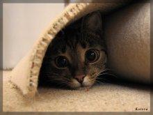 под ковром! / кошка ковры стелить помогала...