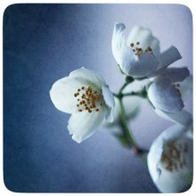 flowers / *****