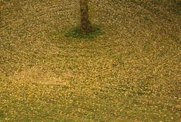 Листья желтые / Такое нынче в трендах