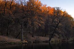 Краски осени / Закатный луч осветил верхушки дуба.