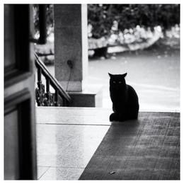 Без названия / кот