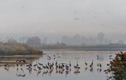 Там за туманами / Рано утром на озерах.Каждый год сюда прилетают сотни тысяч птиц на зимовку из северных стран.Здесь их кормят и с весною они улетают обратно.