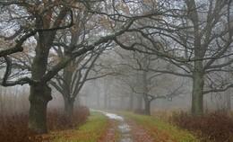 Скверная погода... / Осенняя прогулка в Баболовском парке...