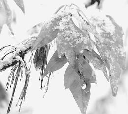 Пока снег мокрый... / То ли осень, то ли зима уже...