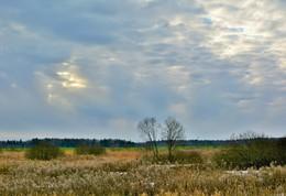 Вот такой нынче январь ... / Оттепель в январе, поля без снега, зеленеют озимые ...