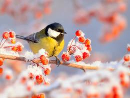 Зимние краски / Не все любят зиму с её морозами и гололёдами. Но опровергнуть то, что это одно из самых красивых и сказочных времён года, вряд ли кто-то сможет, она создает невероятные пейзажи. Зима — воплощение сказки, праздника.