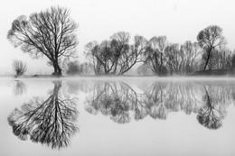 / Morgens bei Nebel an eunen kleinen Teich in der steiermark .