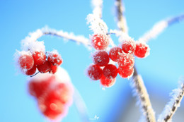 Хороший зимний день | Good winter day / ...