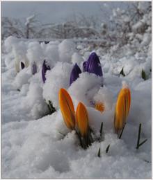 Не первый снег / Не первый, но последний. Почти... Апрельские причуды.