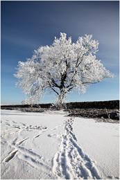Зимнее дерево / Фрагмент красивого зимнего дня ....
