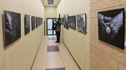 """Моя фотовыставка """"Городская мозаика"""". (2) / Выставка моих фотографий """"Городская мозаика"""" открыта до конца месяца в Т.К. """"Галерея"""" ул. Гурьянова 30. Метро """"Печатники"""" авт. 292 ост. ул. Гурьянова 55. Мой моб. 8-916-811-41-95"""