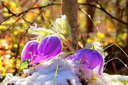 """первый день весны / Цитата """" Однажды ранним утром,  Взглянув на календарь,  Мы с радостью увидим,  Что кончился февраль!  Остались снегопады  И стужи позади…  А впереди капели  Да солнечные дни!  И пусть зима не хочет  Сдавать свои права,  Но на душе и в сердце  Уже царит весна!"""""""