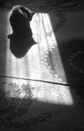 Без названия / Кот в окне