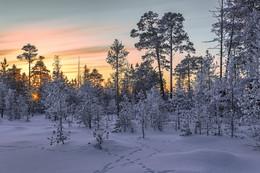 Февральское утро / Западная Сибирь, ХМАО-Югра