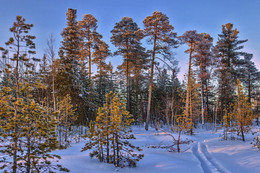 Зима в феврале / Западная Сибирь, ХМАО-Югра