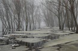 Весна / туманное утро