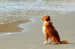 Волнительная пятница / Ассоль. Пляж в Натании. Ждёт своего серфингиста.