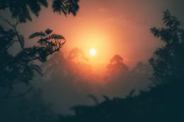 Туманный закат над чайными плантациями / Индия - удивительно многогранная страна! Керала, Муннар, 2018.