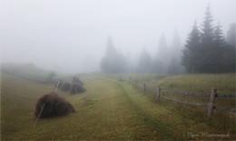 Сонный туман на лугах серебрится / ***