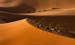 Последний караван / Сахара