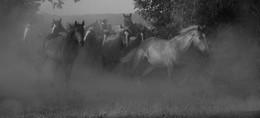 / Лошади