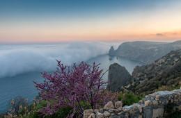 Вечерний туман на мысе Фиолент / На съемку я опоздал: солнце уже зашло за высокую гору и мыс Фиолент погрузился в тень. Спускаться вниз не было смысла, и я решил зайти в монастырский дворик, чтобы сделать несколько кадров с любезного разрешения монахов. Нашел красивый цветущий куст и только сделал первые кадры, как показался плотный туман, укрывающий море, как одеяло. Он двигался очень быстро, как цунами и, менее чем через минуту, захлестнул все, в том числе и меня.