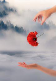 / Размышления о вечности, красоте и скоротечности жизни... Размышления о любви...