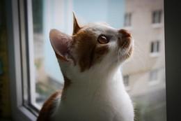 / Мой кот