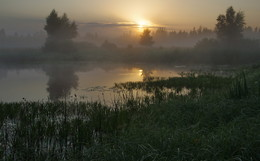 Без названия / летнее утро