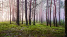Про утренний лес / ***