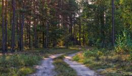 Лесная / Панорама, 4 вертикальных кадра. Гелиос 44