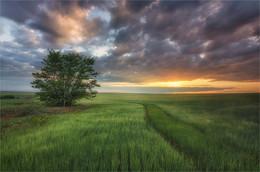 Рассвет в поле / ***