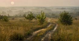 Без названия / туман,утро