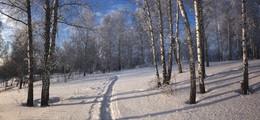 В зимнем лесу. / ***