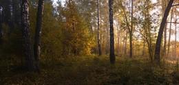 Утро в осеннем лесу. / ***